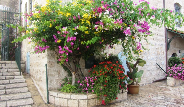 flowers ,Yemin Moshe, Jerusalem tour photography