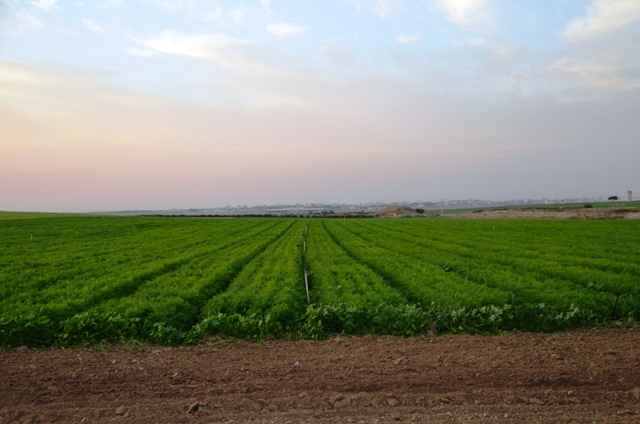 field near GAza