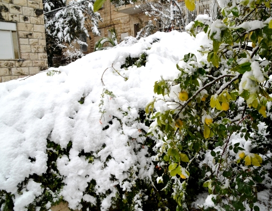 Jerusalem snow photo