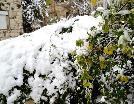 Jerusalem snow photo