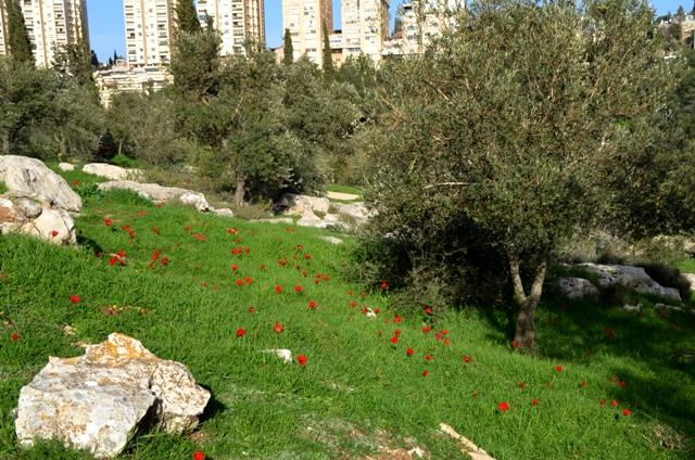 Valley of the Cross, Jerusalem photo