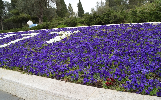 Flowers Jerusalem photo