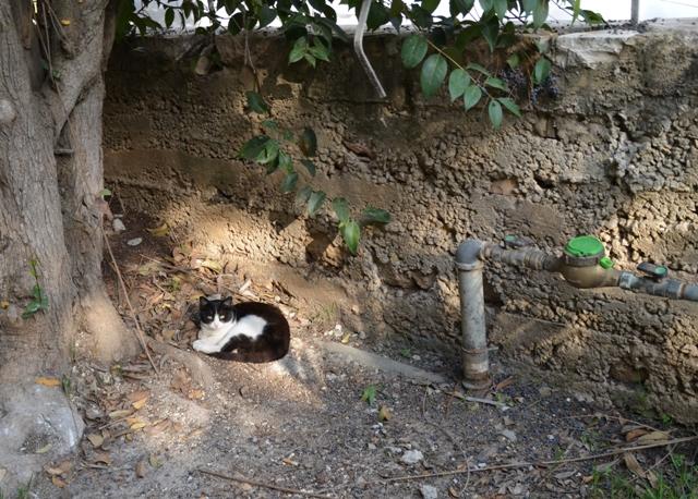 image of cat, cat resting photo